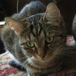 Katzen im Homeoffice